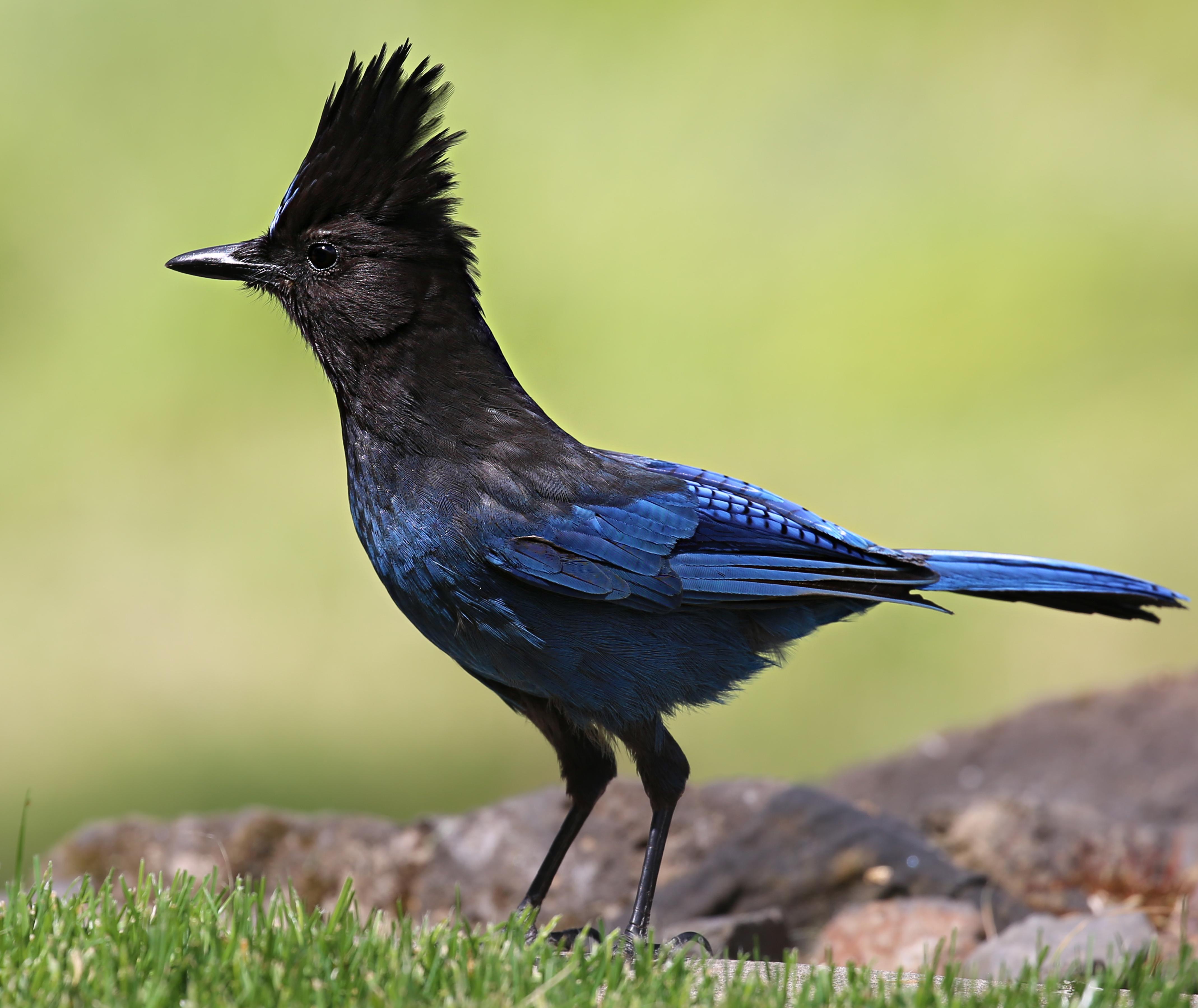 Birds: Backyard Birds